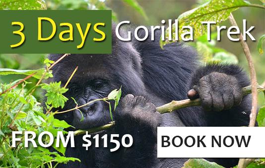 Short gorilla safari
