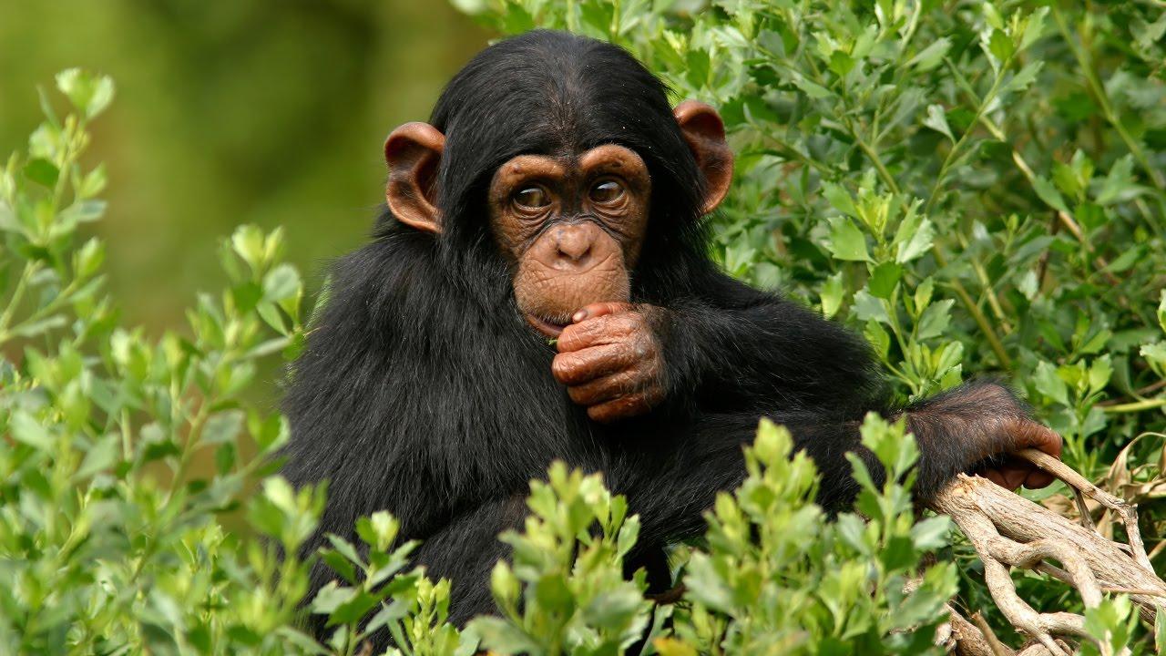 3 Days Ngamba Island Chimpanzee Excursion