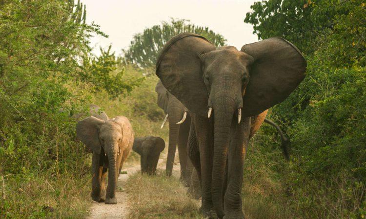 5 Days Bwindi Gorilla & Murchison Falls Safari