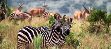 7 Days Rwanda Gorilla Safari