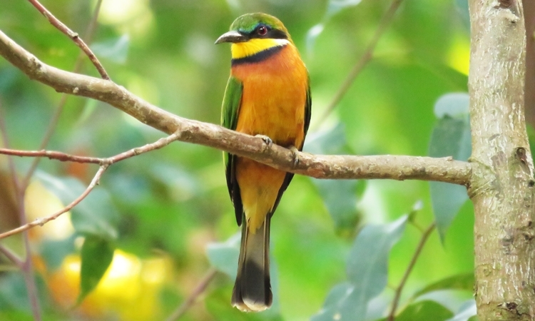Rwanda Birding Review