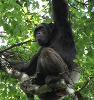 Congo wildlife safaris