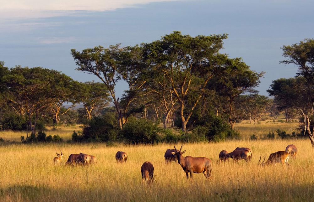 10 days Uganda and Rwanda Adventure Safari