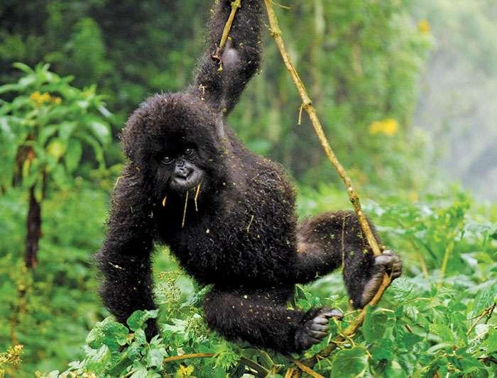 About Explore Rwanda Tours