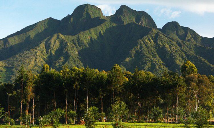 Four National Parks of Rwanda