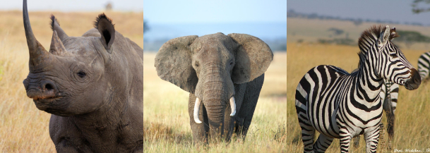 Some Animals in Akagera National Park
