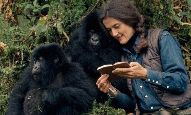 Dian Fossey Safari