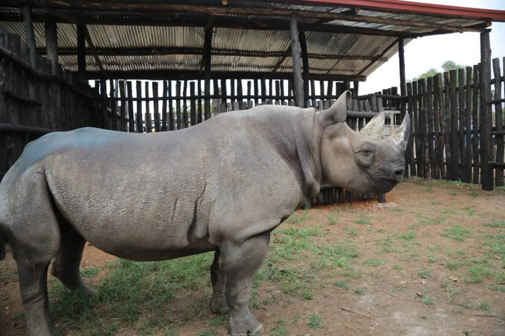 The 5 Eastern Black Rhinos