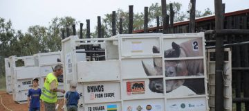 The 5 Eastern Black Rhinos