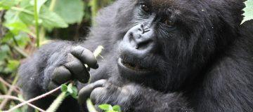 Best time to visit Rwanda National Parks