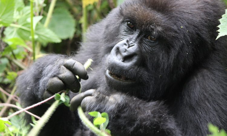 Best time to visit Rwanda National Parks