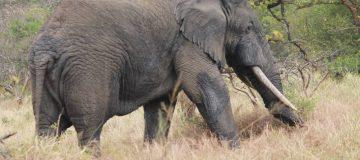 2 Days Akagera National Park