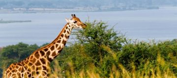 4 Days Murchison Falls & Delta Cruise Tour