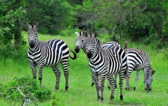 3 Days Lake Mburo National Park Safari