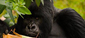 7 Essentials to Consider for a Rwanda Safari Tour