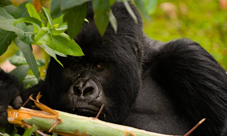 7 Essentials to Consider for a Rwanda Safari Tour