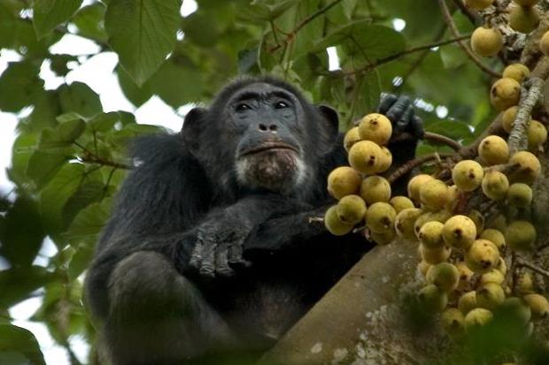 4 Days Murchison Falls & Chimpanzee Trekking