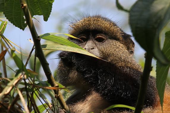 6 Days Explore Rwanda Tour