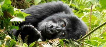 3 Days Uganda Gorilla Trekking from Kigali