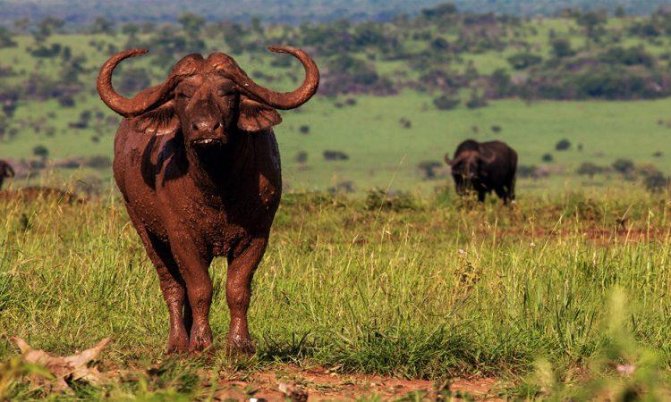 3 Days Kidepo Flying Safari