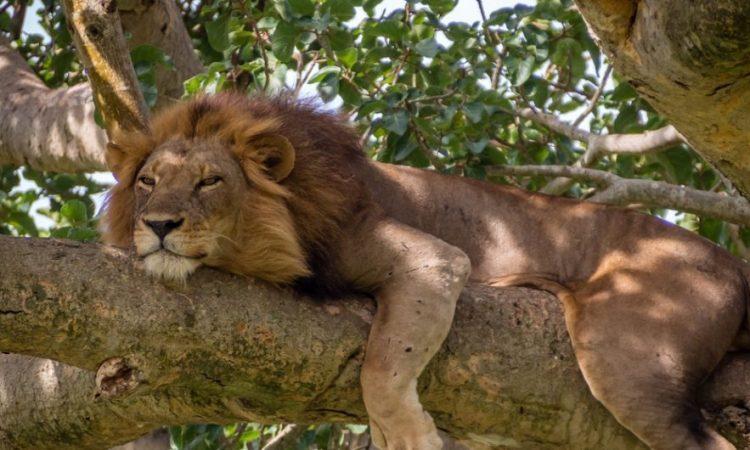 4 Days Queen Elizabeth Wildlife and Chimpanzee trekking tour