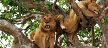 3 Days Queen Elizabeth National Park tour