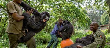 Sekwenkwe Gorilla Orphanage
