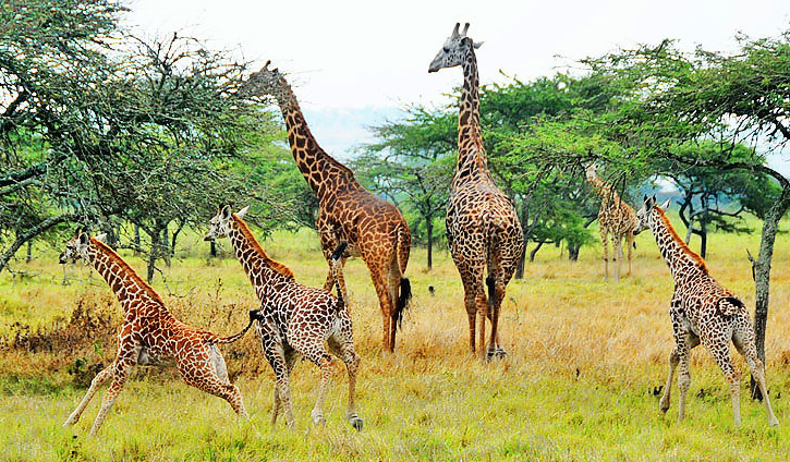 Akagera National Park Fees