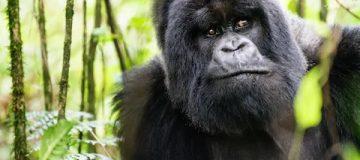 Facts about Virunga National Park