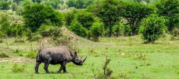 Reasons To visit Akagera National Park