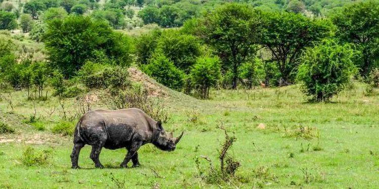 Reasons To visit Akagera National Park