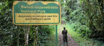 Bwindi Impenetrable National Park Walking Trails