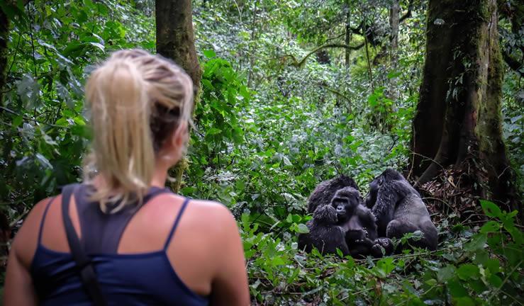Gorilla Trekking Destinations in Africa