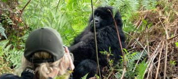 Gorilla Trekking in Bwindi Impenetrable National Park