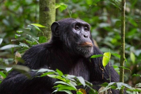 4 days Nyungwe forest national park and Lake Kivu visit