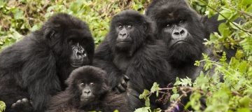 Tips to consider before visiting in Rwanda