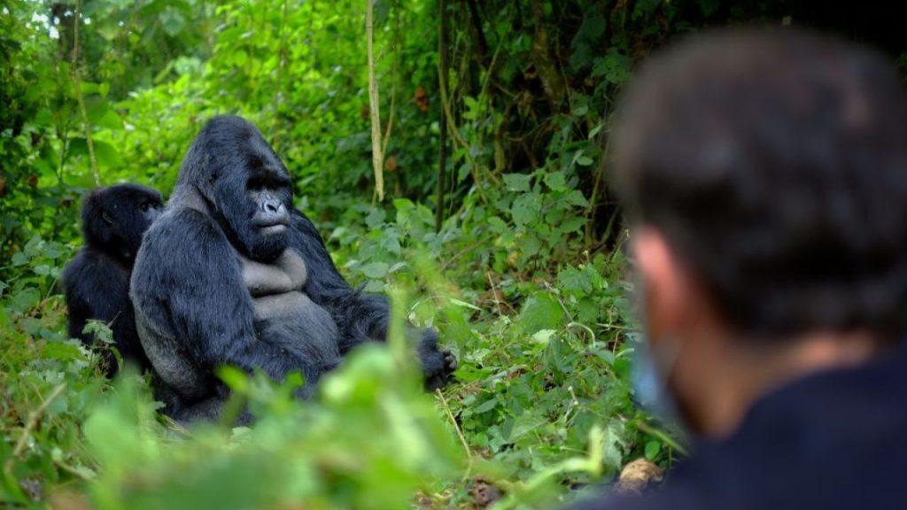Travel Guide for Gorilla Trekking in Rwanda