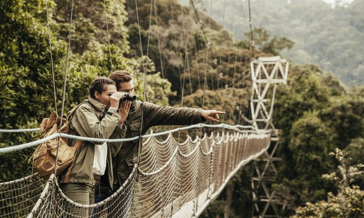 Travel Guide for Nyungwe National Park