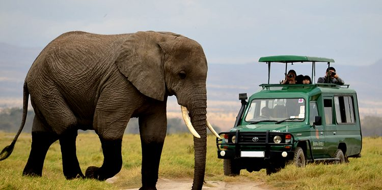5 days Akagera national park and Volcanoes national park
