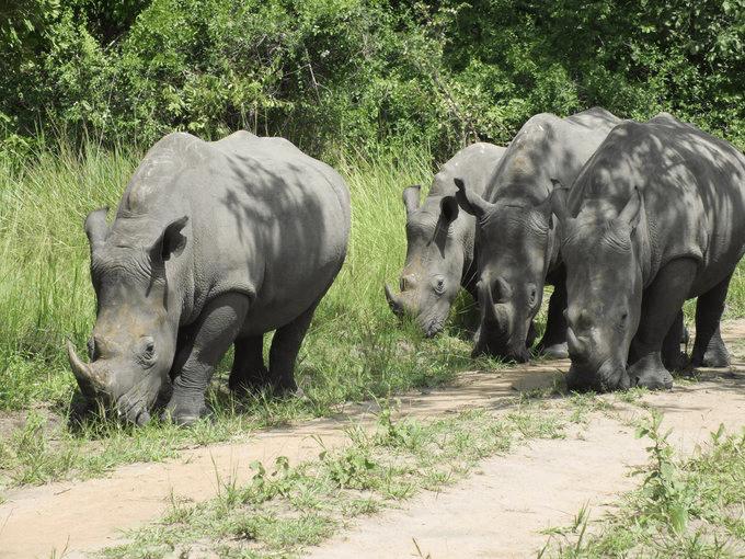 8 days Uganda Safari- Gorilla Trekking, Wildlife and Culture