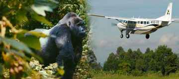 3 Days Bwindi Flying Safari