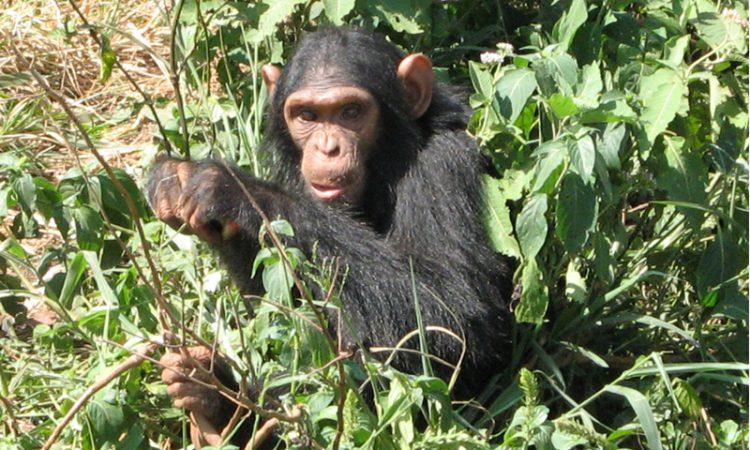 3 Days Nyungwe National Park tour