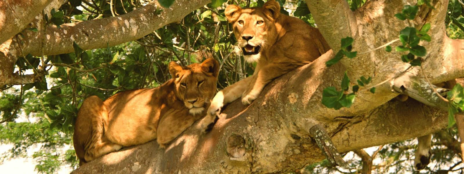 6 days Uganda wildlife safari
