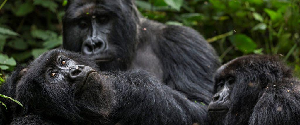 4 Days Rwanda Wildlife & Uganda Gorilla Trekking