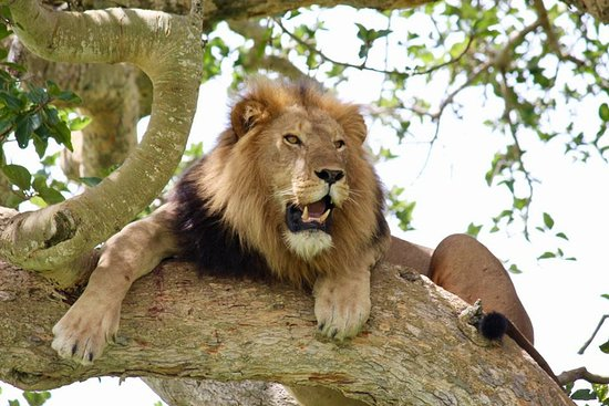 4 Days Lake Mburo & Queen Elizabeth Wildlife Safari