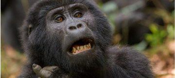 2 Days Bwindi Gorilla Trekking from Kigali