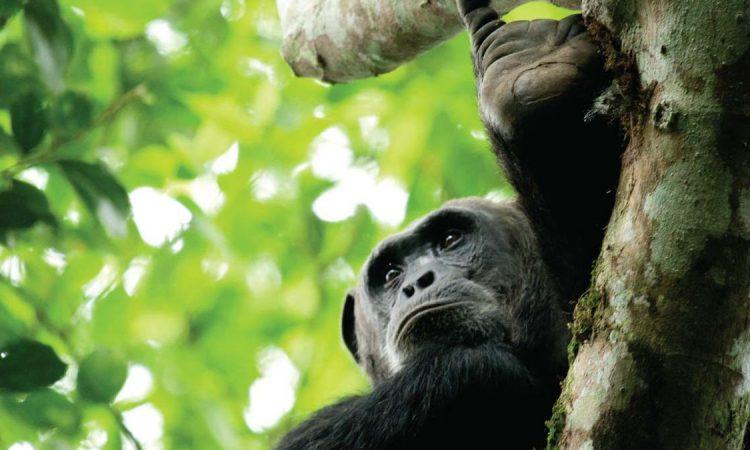 15 Days Uganda and Rwanda Safari