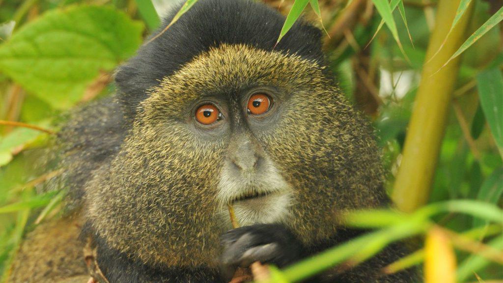 18 Days Uganda and Rwanda Safari