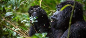 8 Days Explore Rwanda Tour