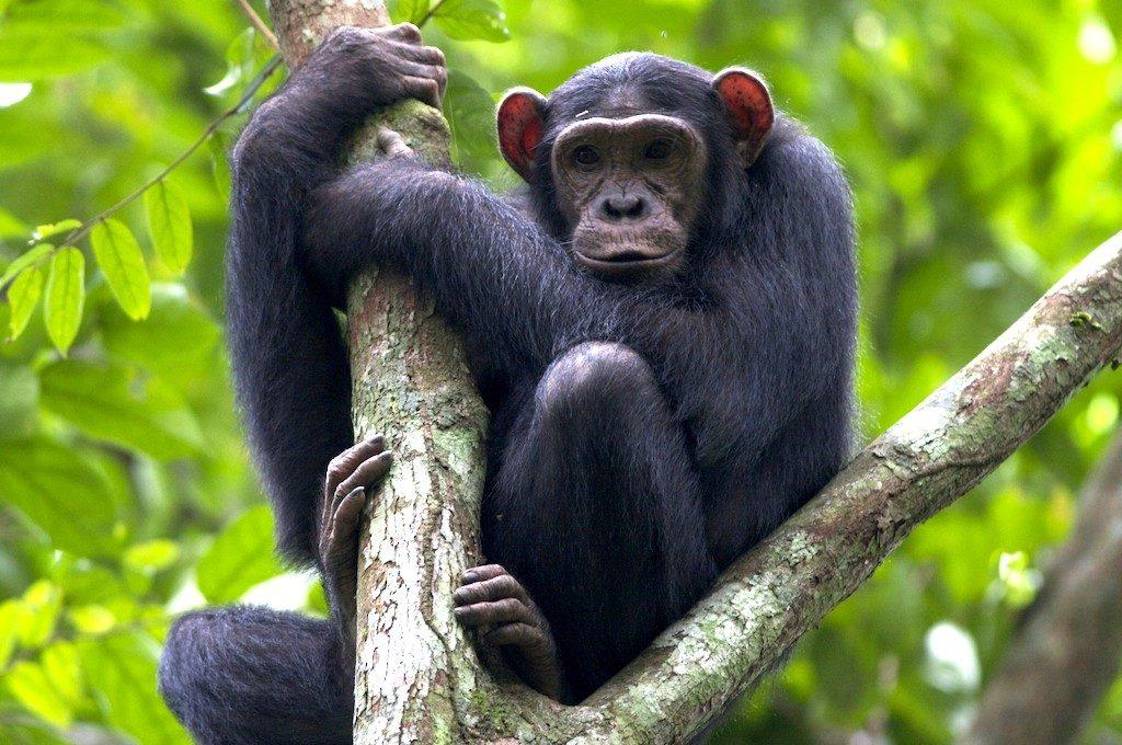13 Days Uganda and Rwanda safari